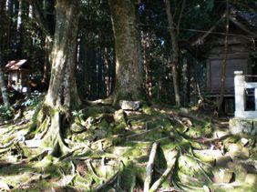 赤猪岩神社林